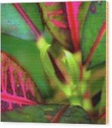 Plants In Hawaii Wood Print