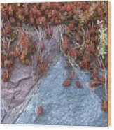 Plants On The Rock Two  Wood Print