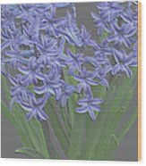 Plaster Hyacinth Wood Print
