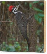 Plastic Wrapped Pileated Woodpecker Wood Print