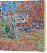 Platan Tree In Sunny Autumn Wood Print
