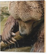 Play With Me Grizzly Wood Print