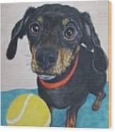 Playful Dachshund Wood Print by Megan Cohen