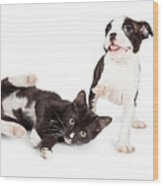 Playful Kitten And Puppy Playing Wood Print