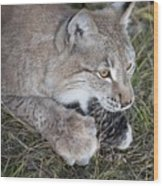 Playful Lynx Wood Print