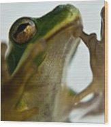 Please Not In A Frogs Eye Wood Print