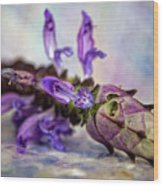 Plectranthus On Show Wood Print