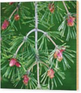 Plentiful Pine Wood Print