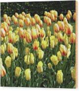 Plenty Of Tulips Wood Print