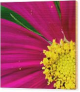 Plink Flower Closeup Wood Print