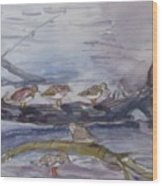 plovers in Jost VanDyke Wood Print