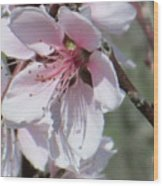 Plum Bloom Wood Print by Rosalie Klidies
