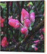 Plum Blossom 1 Wood Print