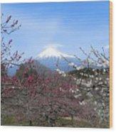 Plum Blossom's At Iwamoto Japan Wood Print