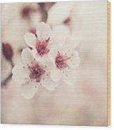 Plum Blossoms Wood Print by Lisa Russo