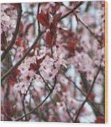 Plum Tree In Bloom Wood Print