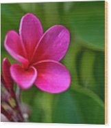 Plumeria - Royal Hawaiian Wood Print