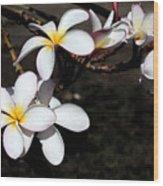 Plumeria 1 Wood Print