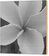 Plumeria 2 Wood Print