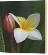 Plumeria Bloom Wood Print