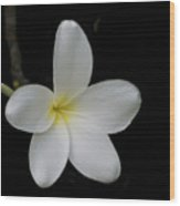 Plumeria Blossom Wood Print