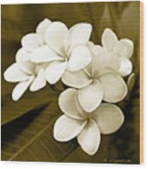 Plumeria - Brown Tones Wood Print