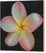 Plumeria Flower On Black Wood Print