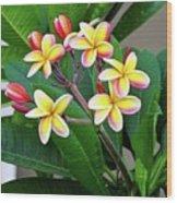 Plumeria Flowers 5 Wood Print