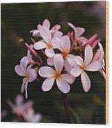 Plumeria Flowers Wood Print
