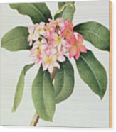 Plumeria Wood Print