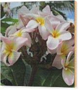 Plumeria In Pink 3 Wood Print