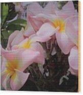 Plumeria In Pink 4 Wood Print