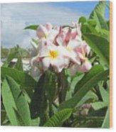 Plumeria In Pink Wood Print