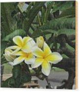 Plumeria In Yellow 2 Wood Print