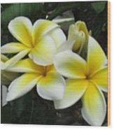 Plumeria In Yellow 3 Wood Print