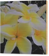 Plumeria In Yellow 4 Wood Print
