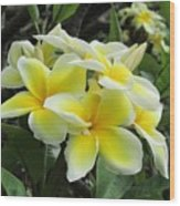 Plumeria In Yellow  5 Wood Print