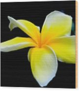 Plumeria In Yellow Wood Print