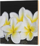 Plumeria Obtusa Singapore White Wood Print