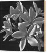 Plumeria Proper Evening Wood Print