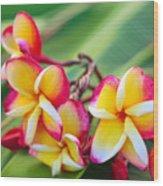 Plumeria Rainbow Wood Print