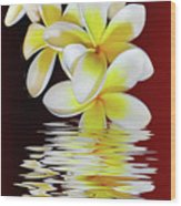 Plumeria Reflections By Kaye Menner Wood Print