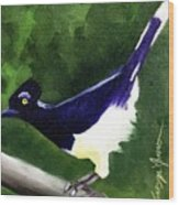 Plush Crested Jay Wood Print