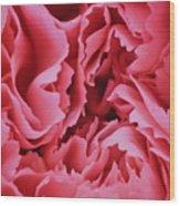 Plush Lush Rose Wood Print