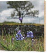 Pocket Of Lupines Wood Print