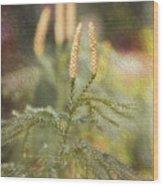 Poconos 7933 Wood Print