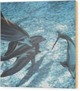 Pod Of Dolphins Wood Print