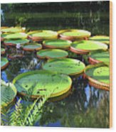 Pods Of The Pond Wood Print