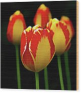 Poetically Tulip Wood Print