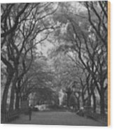 Poets Walk In Central Park Wood Print
